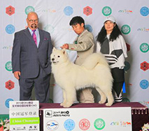 萨琳娜 - (CH.CN) Caroline Of Mo Wang Jia Zu Kennel (FCI)