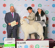 FARA- (CH.CN) Joyous Fara Of Zun Chong Kennel (FCI)