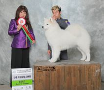 欧丽 - BIS.CN.CH.Ouli Of Mo Wang Jia Zu Kennel (FCI)
