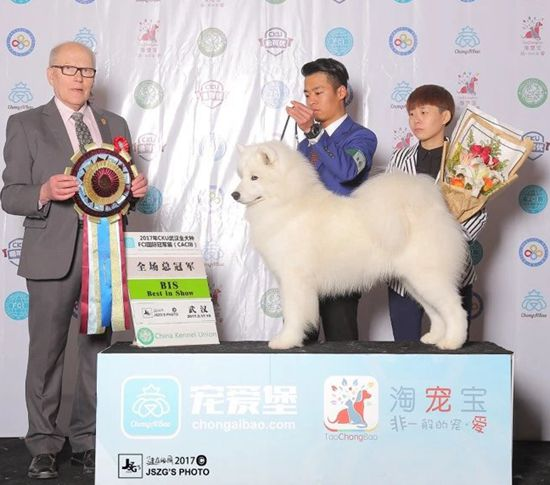 力量(Power) - BIS CN GCH.INT.CN.CH.Power of Mo Wang Jia Zu Kennel (FCI)