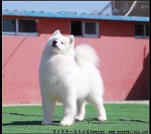 热情- (CH.CN)Pet Hot of Mo Wang Jia Zu Kennel(FCI)